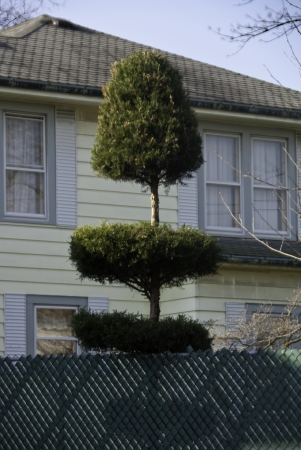 A topiary and a neighborhood home, a fence in the foreground.