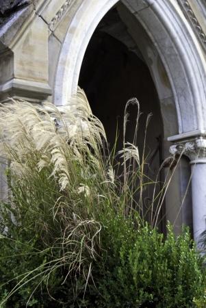 tassles: Ornamental grass with tassles under an cement arch.