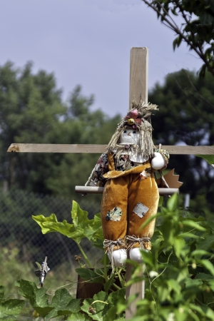 crossbars: A scarecrow on wooden crossbars in a city garden patch.