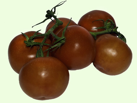 Red tomatoes on a vine with a green background.