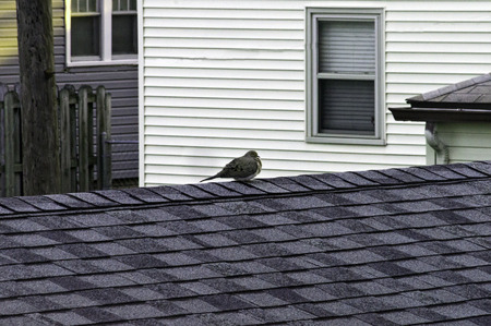 A lone bird sitting on a roof top in a crowded neighborhood.  Stock Photo