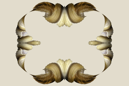 algorithms: A digitally generated image using a set of algorithms on an original photo of a sea shell.  Stock Photo