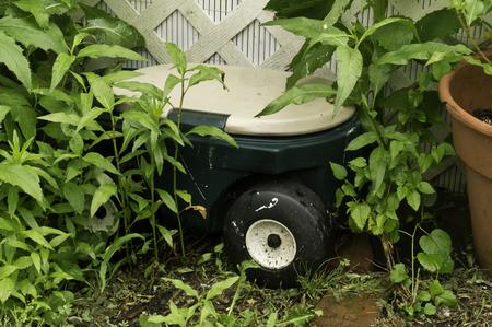 A garden cart hidden among the weeds and greenery.