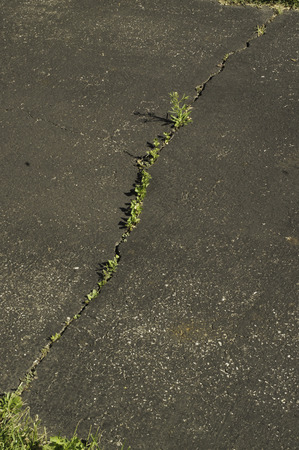 A long crack with weeds coming through in an asphul driveway. Stock Photo