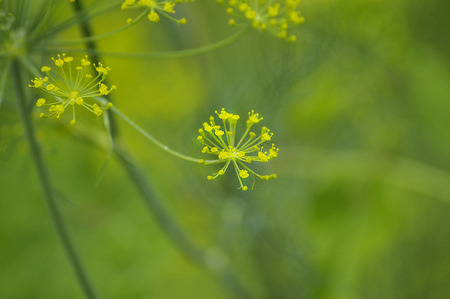 artful: An artful presentation of a weed showing the beauty it is as part of nature.