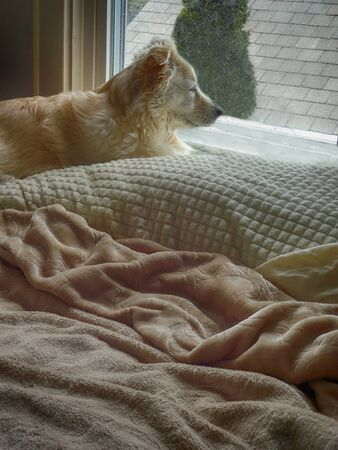 staring out the window while relaxing on the bed.