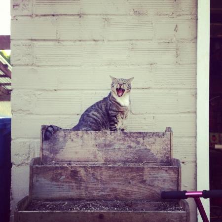 Yawning Kitty Reklamní fotografie