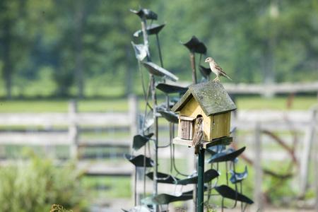 Beautiful shots of birds in a bird house