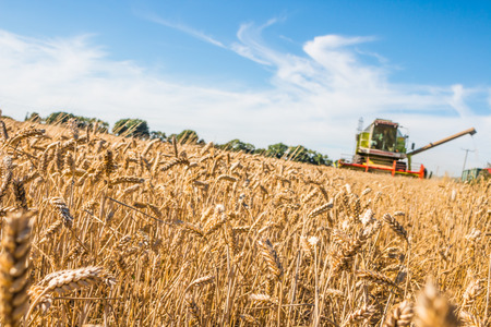 Combine harvester and tractor on the wheat field