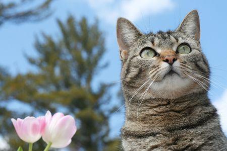 Gray tabby cat in the garden photo