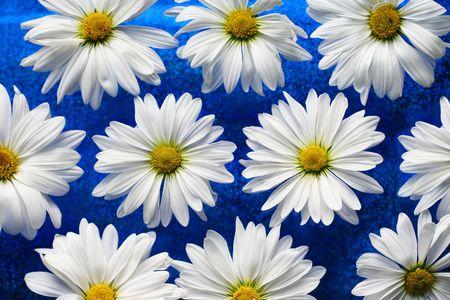 White daisies on blue glass Reklamní fotografie