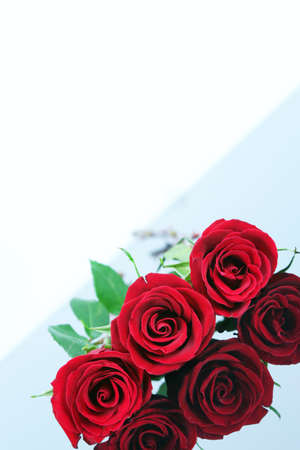 reflective: Three red roses angled on reflective surface Stock Photo