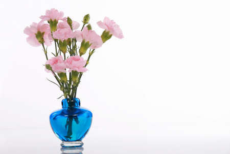 Pink carnations in blue vase with soft reflection