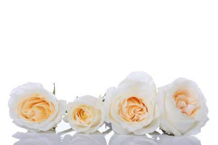 centers: Four white roses with yellow centers in a row