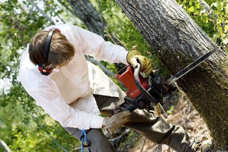 cutting: Man cutting down a tree with a chainsaw