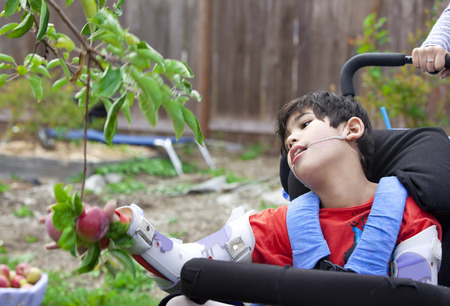 Disabled nine year old  boy in wheelchair picking apples off fruit tree Stockfoto