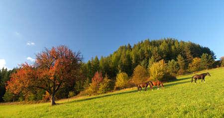 Three horses and Red tree. photo