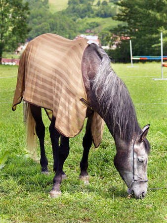 blanket horse: Horse grazing in field with blanket on back, countryside scene.