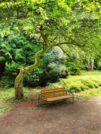 gnarled: Banco de mader nudoso �rbol de hoja verde en el parque. Foto de archivo