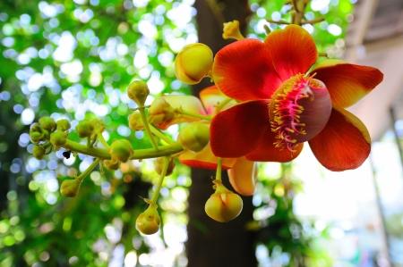 flowers, beautiful, beauty