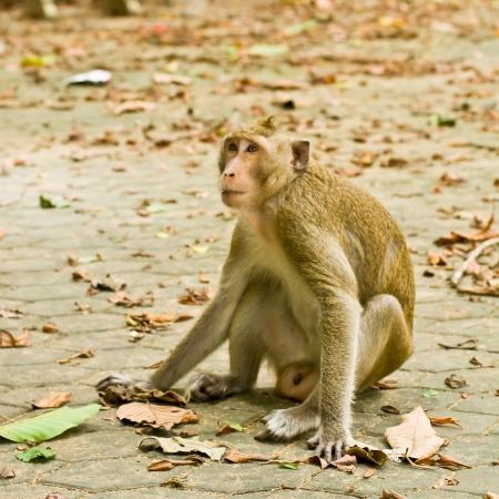 monkey in thailand