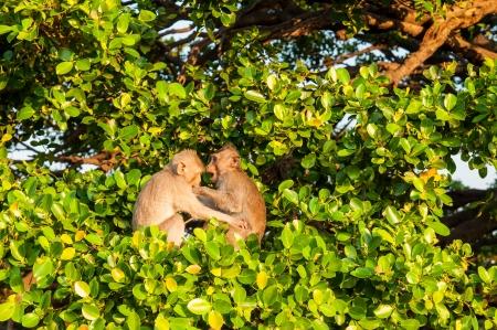 Monkey, Monkey on tree Stockfoto