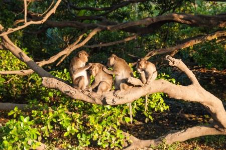 Monkey, Monkey on tree Stock Photo