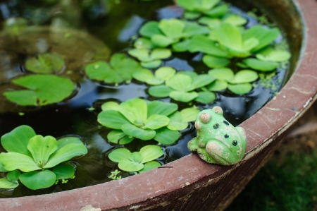 Ceramic frog on the edge of a fish bowl for garden decorate.