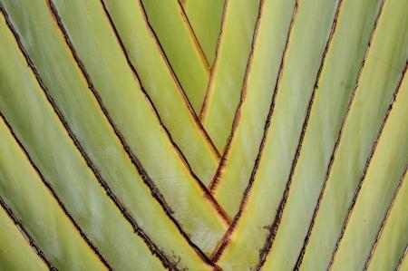 closeup of a palm tree texture