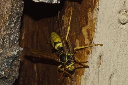 Wasp Reklamní fotografie - 15951463