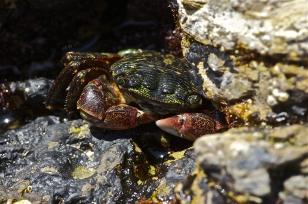 Crab on Rocks Stock Photo