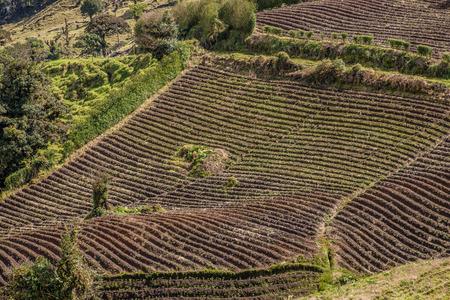 deforested: Potato Farming Fields Stock Photo