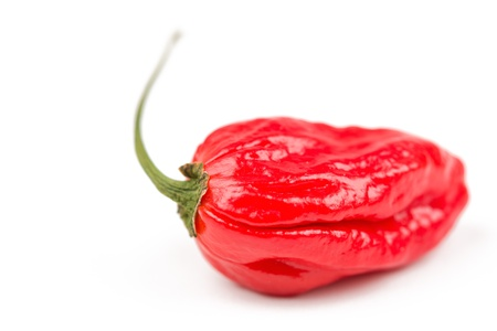 Hot, very very hot Naga morich chili.