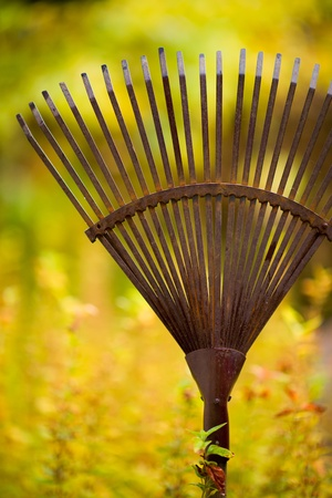 Old rake ready to autumn work, colors of autumn on the background, vertical shot
