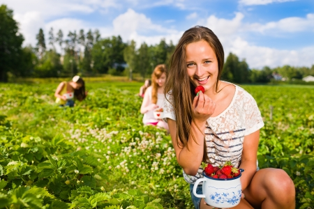 scandinavian people: Harvesting girl on the strawberry field. Focus on her and behind group of girls, she look toward camera, horizontal format