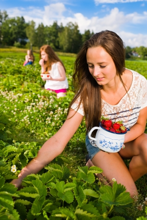 Harvesting girl on the strawberry field. Focus on her and behind group of girls, vertical format Stock Photo