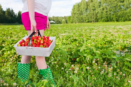 Girl holding full basket of strawberries. Focus on basket and horizontal format