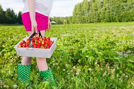 Girl holding full basket of strawberries. Focus on basket and horizontal format