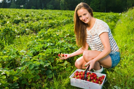 Girl inspect strawberries on field and she pick ripe ones to the basket, girl look toward camera photo