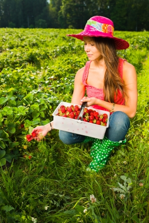 Girl inspect strawberries on field and she pick ripe ones to the basket photo