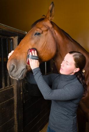 femme a cheval: Femme de toilettage de chevaux dans l'�table, format vertical