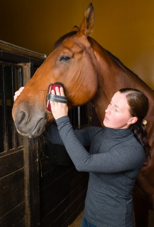 woman and horse: Woman grooming  horse in the stall, vertical format