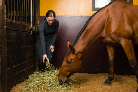 animal feed: Woman feeding horse in the stall, horizon format Stock Photo