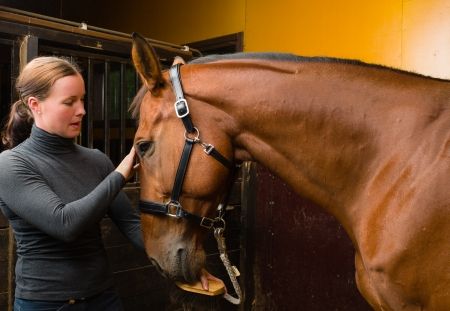 Woman and horse together in the stall, horizon format Stock Photo - 15044324