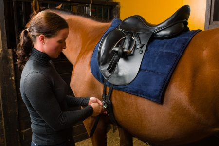 half blooded: Woman saddle a horse in the stall