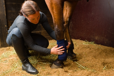 half blooded: Woman installs bandages for the horse in the stall