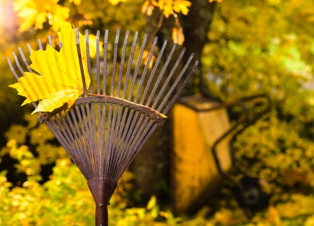 A rake with a maple leaf and the wheelbarrow on background, horizon format Stock Photo