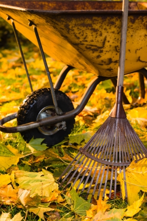Lots of maple leafs, a rake and wheelbarrow are ready, vertical format