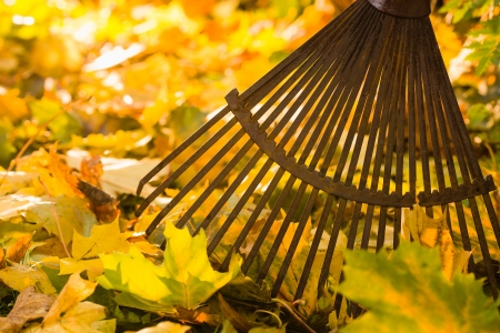 Autumn leaves and a rake on backlight, horizon format