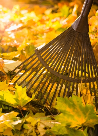 Autumn leaves and a rake on backlight, vertical format